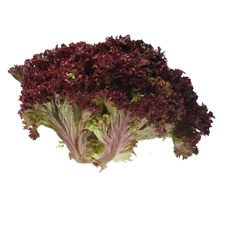 Lettuce (Lollo Rosso) - Imported